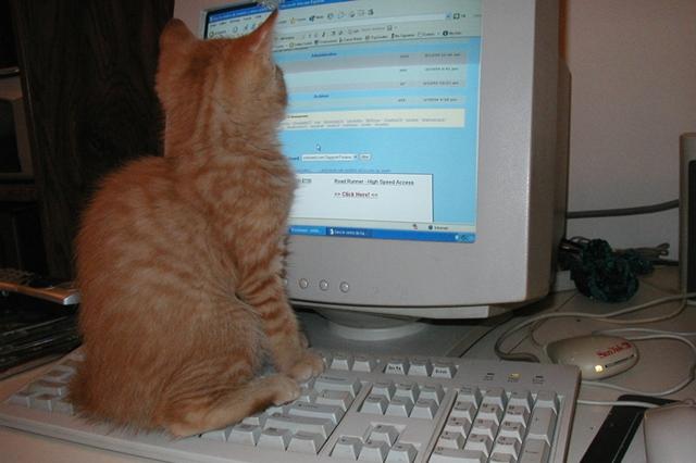 ブログランキングについて